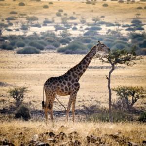 Motorhome Hire Namibia Africa